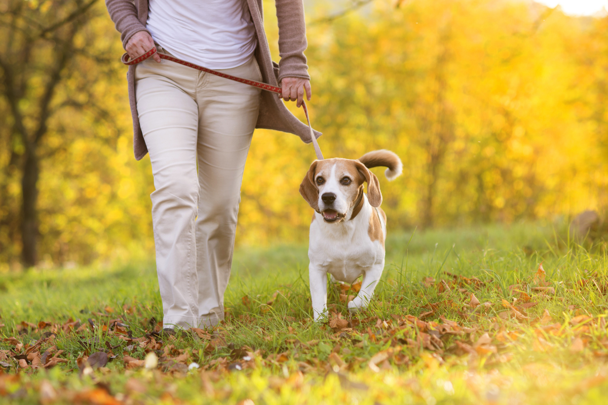 Dog friendly walking routes Padworth, Berkshire